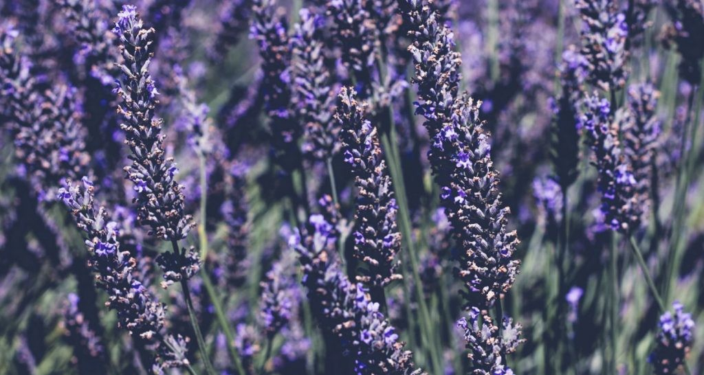 Lavender is common in pillow sprays