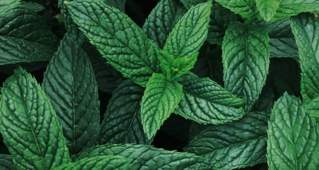 Peppermint is common in pillow sprays