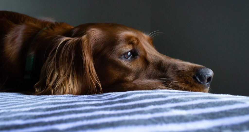 Older dogs could benefit from an orthopaedic mattress