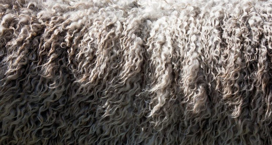 Some pocket sprung mattresses contain wool